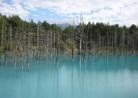 20160812北海道美瑛町「青い池」